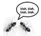 talking ants