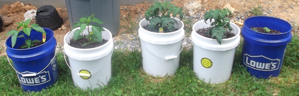 ... Five Gallon Buckets That Are Great For Planting Vegetables. I Honestly  Donu0027t Know If It Matters, But I Will Eventually Change Out All Of My Blue  Buckets ...