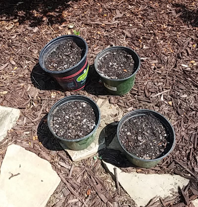 Burpee Garden Green Beans