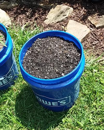 Burpee Garden Green Beans - 5-gallon bucket