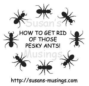 How to get rid of those pesky ants!