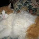 Ibis the cat