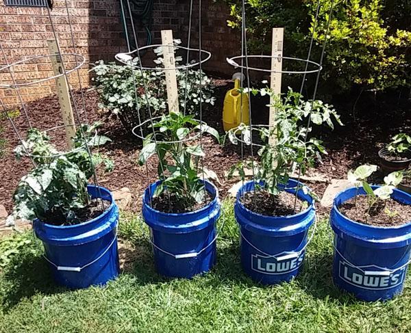 vegetable plant growth
