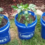 My First Bucket Garden - Tomatoes and Bell Peppers